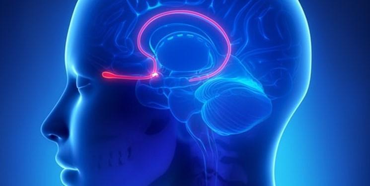 19 خدمت جدید به پژوهشگران نقشه برداری مغز ارائه شد