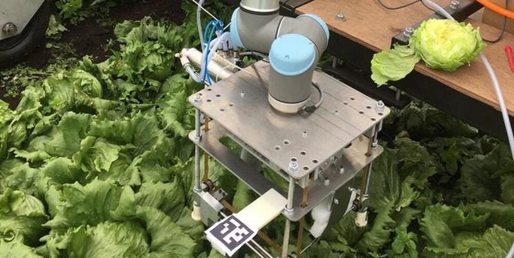 رباتی که کاهوها را بسته بندی می نماید