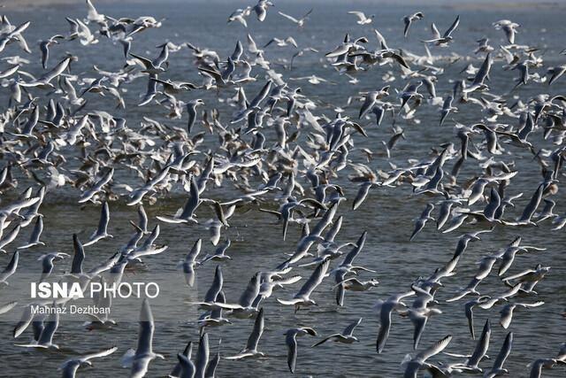 به دنبال متخلفان صید پرندگان آبزی در تالاب های خوزستان