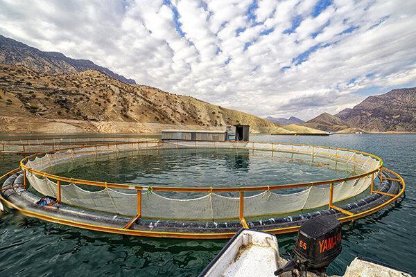 22 هزار تن آبزیان پرورشی در هرمزگان فراوری شد