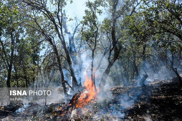 جنگل های گچساران پس از 3 شبانه روز همچنان در آتش می سوزند